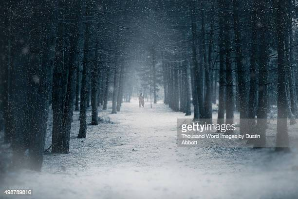 winter romance - dustin abbott stock pictures, royalty-free photos & images