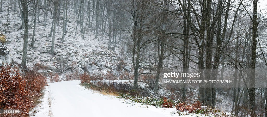 Winter rural road : Stock Photo