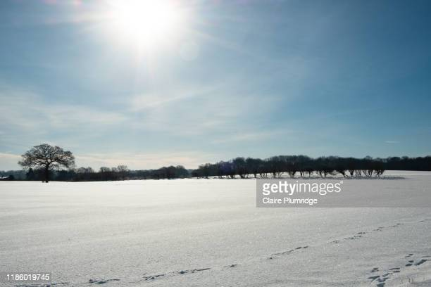 winter rural snow scene, field covered in snow in bright sunshine and a blue sky - newbury england stock pictures, royalty-free photos & images