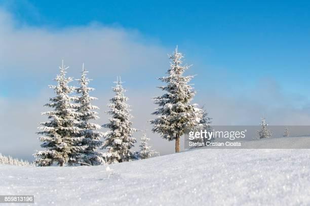 Winter scene in  Transylvania