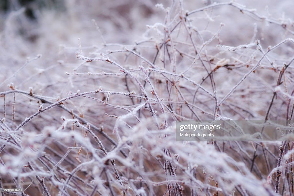 winter scene, landscape : Stock Photo