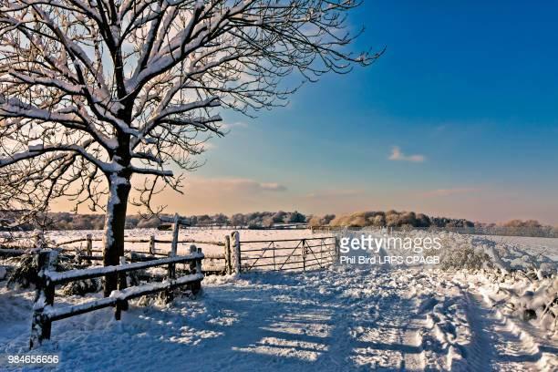Winter Scene near East Grinstead