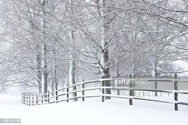 a winter scene of snow covered trees and a fence - ogphoto stock pictures, royalty-free photos & images
