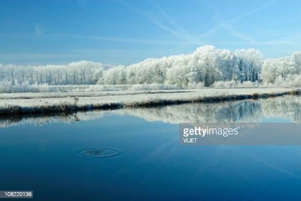 winter scene - árvore de folha caduca - fotografias e filmes do acervo