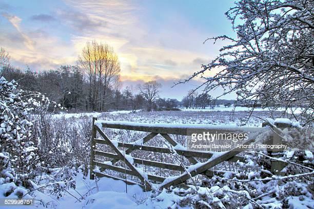 winter scene - snow scene stock photos and pictures