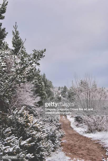 winter scene - gregoria gregoriou crowe fine art and creative photography. stockfoto's en -beelden