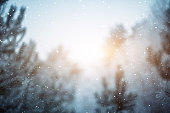 Winter scene - snowfall in the woods