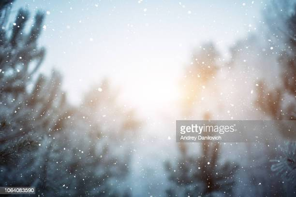 winter scene - snowfall in the woods - cold temperature stock pictures, royalty-free photos & images