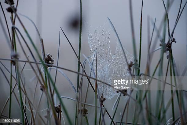 a winter scene with an icy cobweb. - alex saberi photos et images de collection