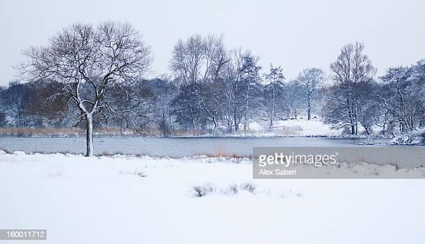 a winter scene with snow cover at the pen ponds. - alex saberi stockfoto's en -beelden