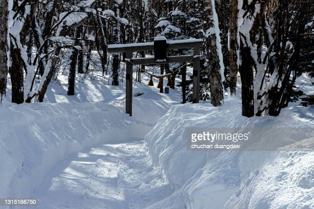 winter scene with snowfall in the woods - 一月 ストックフォトと画像