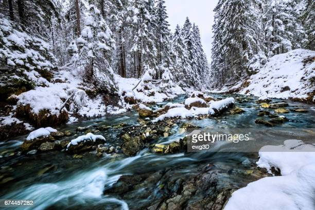 Winter scene with Tatra Mountain stream in the forest