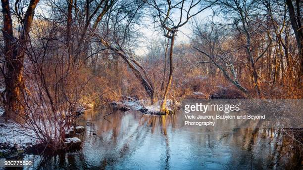 Winter Scene with Trees and Water at Sunrise