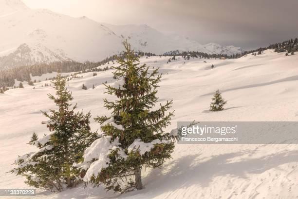 Winter scenery at Alp Flix, Sur, Surses, Parc Ela, Region of Albula, Canton of Graubünden, Switzerland, Europe.