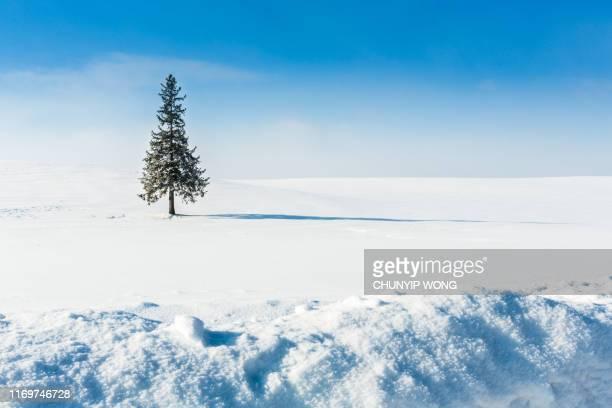 冬の風景。美瑛北海道ジャパン - 深い雪 ストックフォトと画像