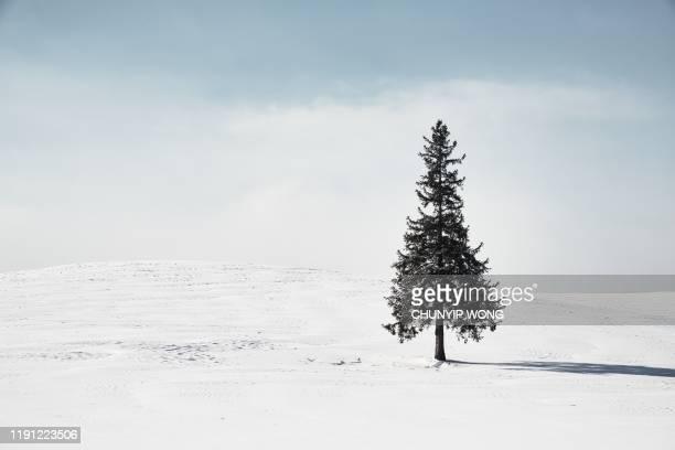 winter scenery. biei hokkaido japan - single tree stock pictures, royalty-free photos & images