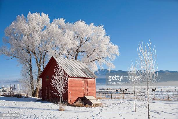Winter scenic with barn and frosty trees