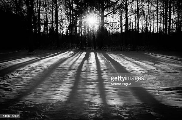 Winter Shadows Black and White View of Sunset in Winter Woodland Area