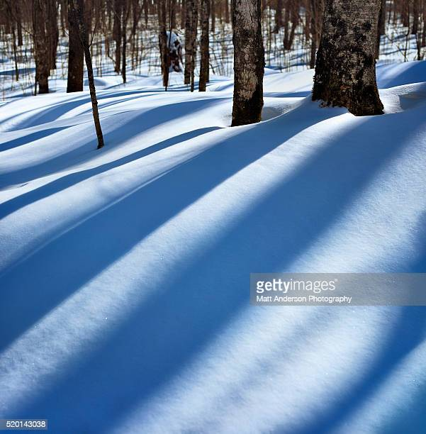 Winter shadows on the snow