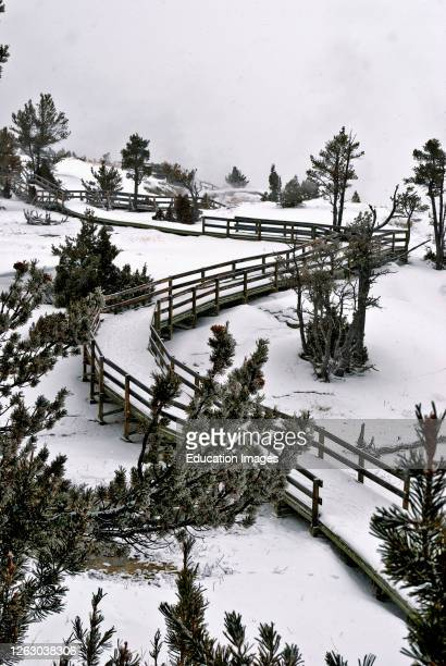 Winter Snow covers a Boardwalk at Mammoth Hot Springs in Yellowstone National Park