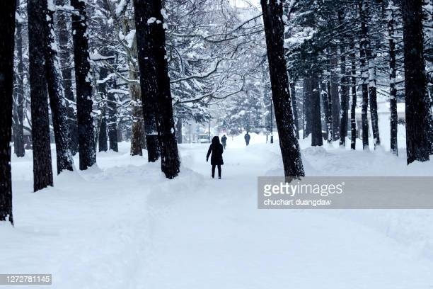 winter snow forest path landscape, snowy forest path in winter scene, winter snow forest pathway landscape - 自然 ストックフォトと画像