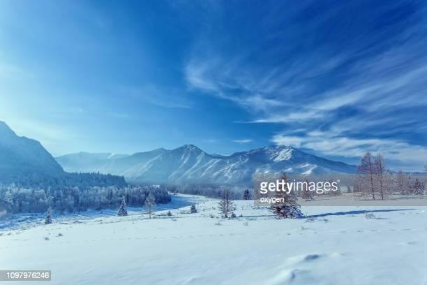 winter snow mountain hills with spruce near katun river - 北 ストックフォトと画像