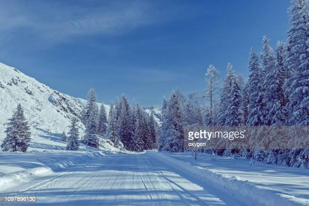 winter snow mountain hills with spruce near road - シベリア ストックフォトと画像