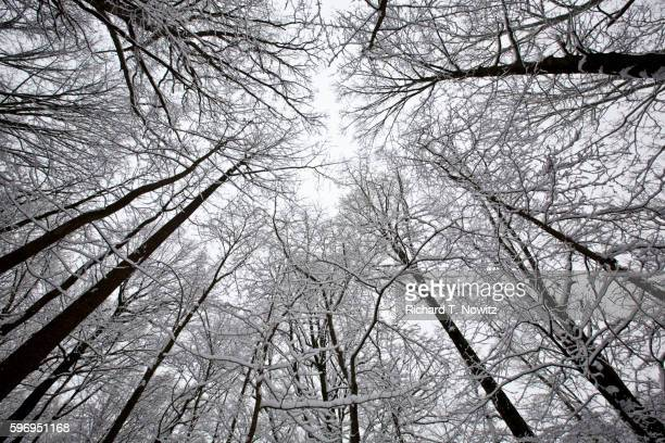winter snow on trees in maryland - rockville maryland stock pictures, royalty-free photos & images