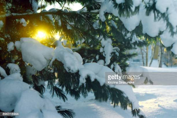 winter solstice - winter solstice stock photos and pictures