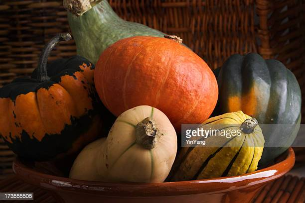 Winter Squash Vegetable Varieties Group—Acorn, Butternut, Carnival, Delicata, Hubbard