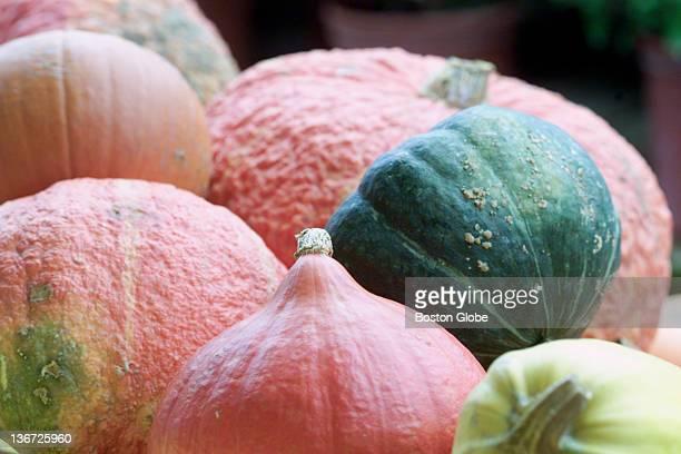 Winter squashes at Wilson Farms acorn spaghetti sugar pumpkin buttercup Amber Buttercup and Turbine Squash