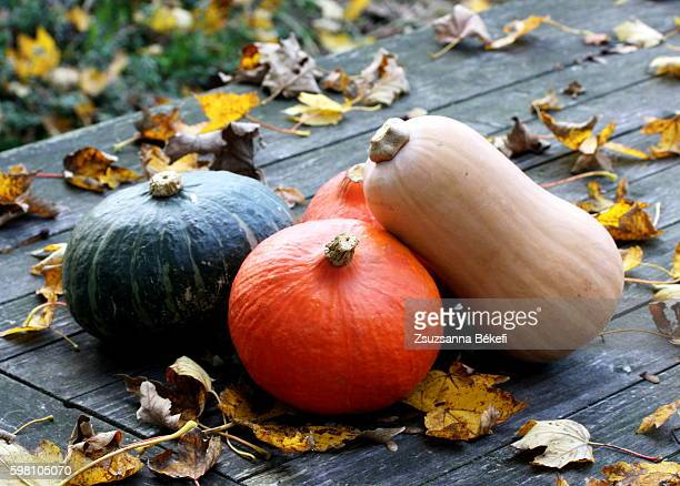 winter squashes on a garden table with autumn leaves - crushed leaves stock pictures, royalty-free photos & images