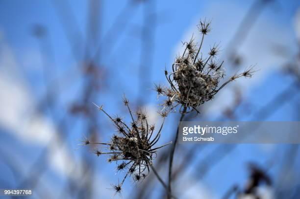winter starbursts