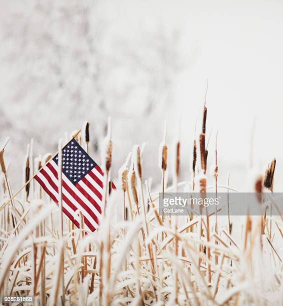 winter still life with american flag amongst frozen cattails - armed forces day stock pictures, royalty-free photos & images