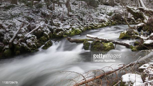 winter stream - snag tree stock pictures, royalty-free photos & images