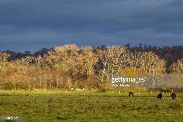 winter sun on widbrook common - berkshire england stock pictures, royalty-free photos & images