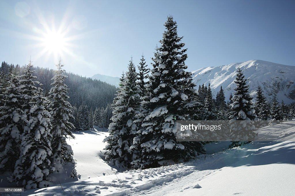 Winter sun : Stock Photo