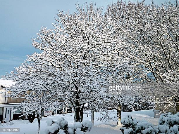 winter sunlight - zeesstof stock pictures, royalty-free photos & images