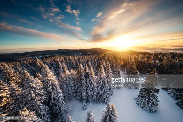 Winter Sunrise Above The Forest