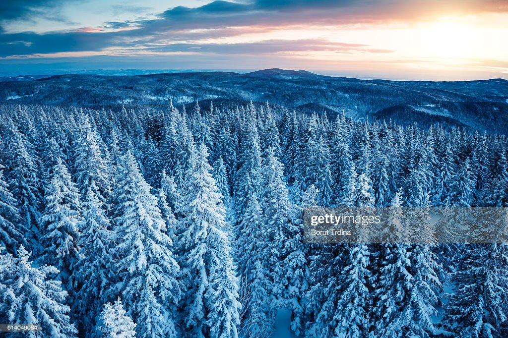 Winter Sunrise : Stock Photo
