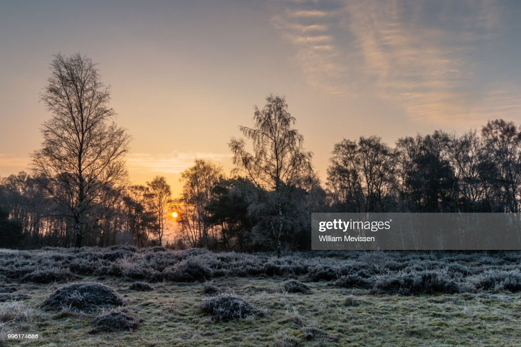 Winter Sunrise : Stockfoto