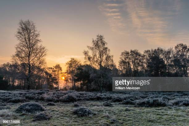 winter sunrise - william mevissen fotografías e imágenes de stock