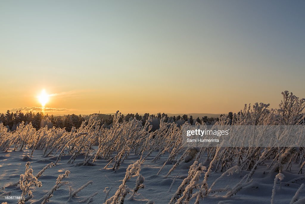 Winter sunset in Finland : Stock Photo