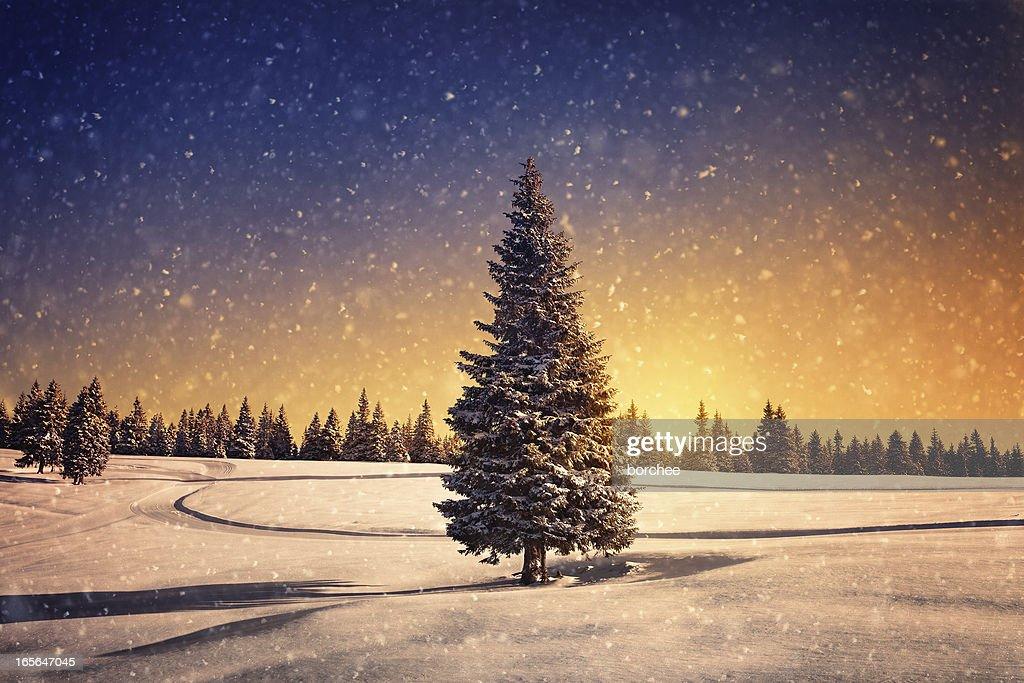 冬季の夕暮れ : ストックフォト