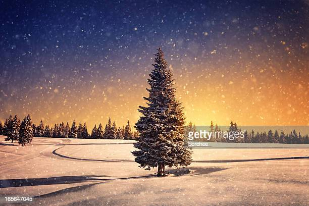 winter sunset - country christmas stock pictures, royalty-free photos & images