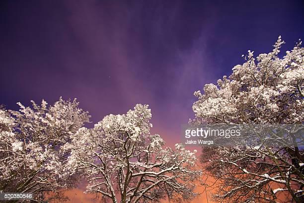 winter sunset, seattle, wa - jake warga fotografías e imágenes de stock