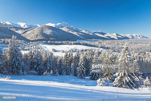 winter tatra mountains landscape - spruce tree stock pictures, royalty-free photos & images