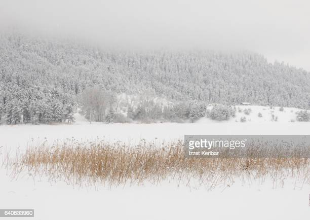 Winter time frozen Abant Lake, near Bolu, northern Turkey'n