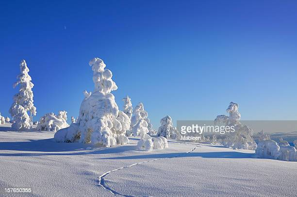 Winter, tracks in snow covered landscape