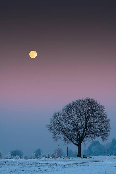 Winter tree against full moon